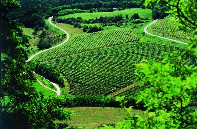 croatia_istra_food_vineyard_0003